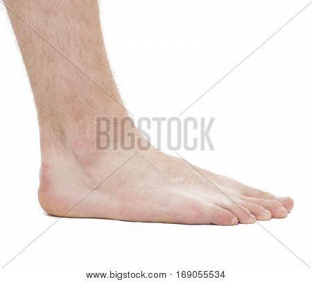 Foot - Anatomy Male - Studio Photo Isolated On White