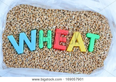 Wheat seeds background or pattern with magnetic letters