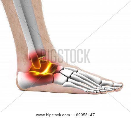 Ankle Pain Injury - Anatomy Male - Studio Photo Isolated On White