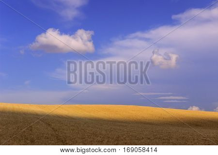 Between Apulia and Basilicata. Hilly landscape with cornfields. ITALY. Agricultural countryside: field between light and shadow with lonely clouds.