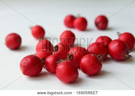 Red Hawthorn berries scattred on white background, close-up