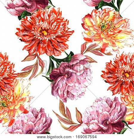 Wildflower peony flower pattern in a watercolor style isolated. Full name of the plant: peony. Aquarelle wild flower for background, texture, wrapper pattern, frame or border.