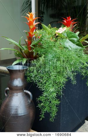 Tropical Plants In Container