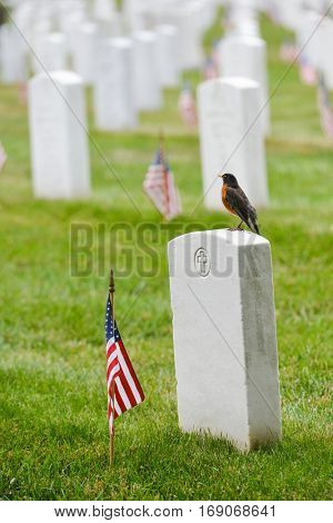 Tombstones in Arlington National Cemetery - Near to Washington DC, USA