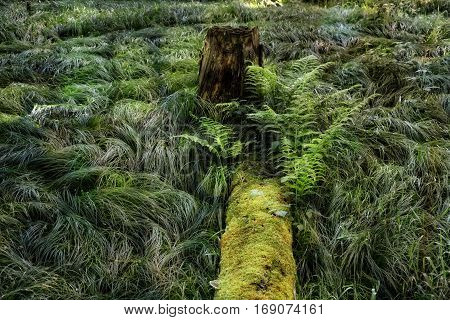 morscher overgrown tree trunk in forest with tree stump with light reflection