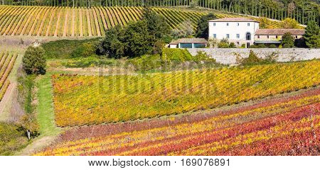 Pictorial Tuscany countryside -  vineyards in Chianti region in Italy