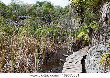 Landscape at the vegetation near a cenote at Giron on Cuba