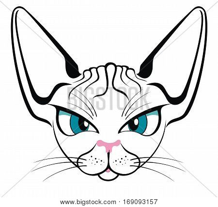 Cat. Funny cat for your design. Sphynx