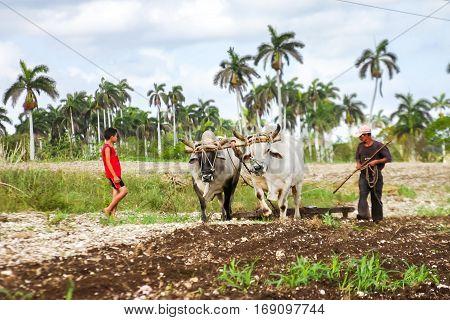 Cuban farmer plows his field with two oxen. Cuba, Matanzas, June 3, 2009.