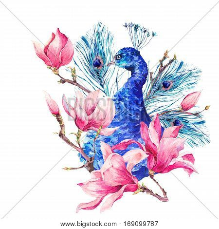 Watercolor Vintage Peacock with Flowers Magnolia, Twigs, Leaves and Feathers, Abstract natural bohemian watercolor illustration isolated on white background