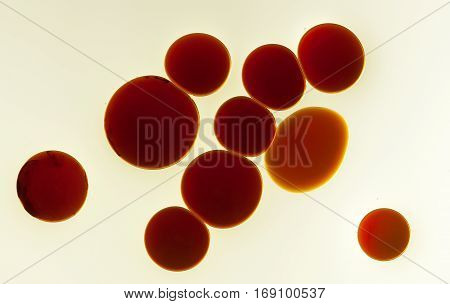Oil And Balsamic Vinegar Abstract
