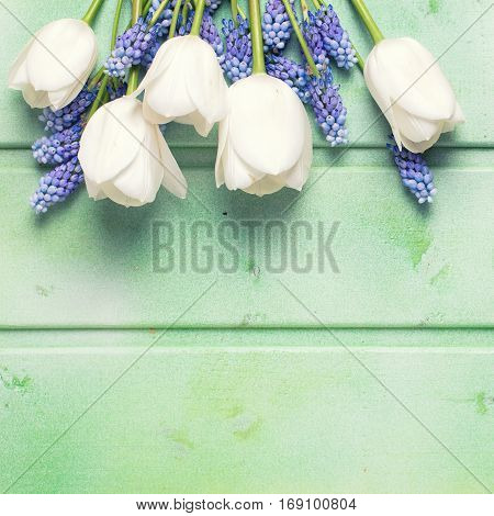 White tulips and blue muscaries flowers on green wooden background. Selective focus. Place for text. Toned image.