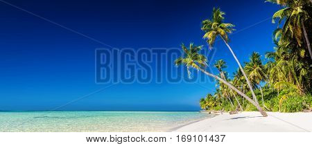 Panorama of tropical island with coconut palm trees on sandy beach. Maldives, Indian Ocean.