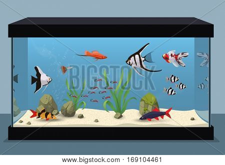 Freshwater aquarium illustration containing different kinds of fishes