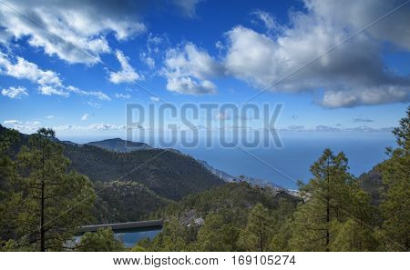 central Gran Canaria Nature Park Tamadaba canarian Pine trees on the slopes Teide on Tenerife visible over clouds