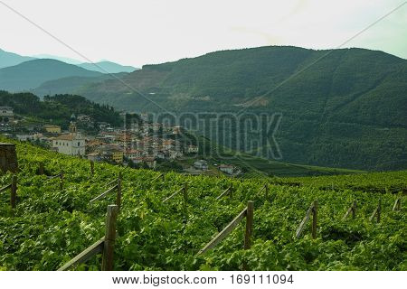 A winery in Trento. Wine production is one of the main industries in this area.