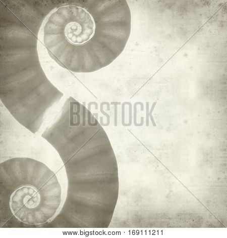 textured old paper background with ram horm shell