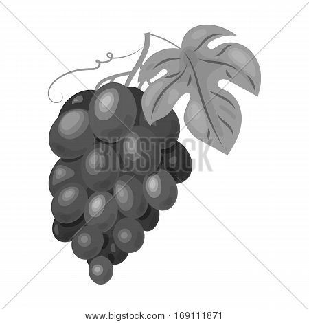 Bunch of grapes icon in monochrome design isolated on white background. Wine production symbol stock vector illustration.