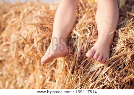 Close up of bare baby feet with ears of wheat as a background. Sunny summer day. On open air.