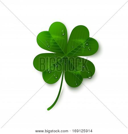 Saint Patrick's Day four leaf clover with dew drops isolated on white background. Holiday 3d icon. Vector illustration. Lucky and success symbol.