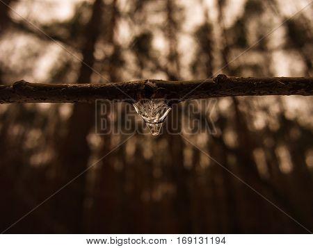 Icedrop at the tree,Winter scenery,Macro photography.Nostalgia photo
