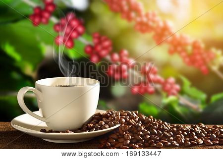 Cup of coffee with smoke and coffee beans on coffee tree background