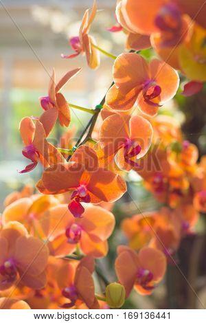 Orange orchid flower in garden show nature concept