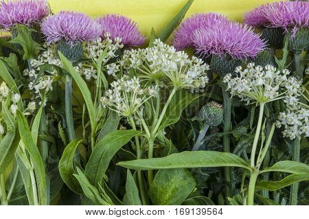 Wild white small inflorescence flowers and pink burdock with lush green leaves on pale yellow textured background