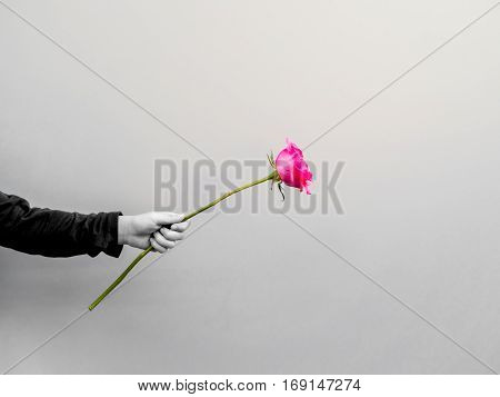 small hand holding the rose flower give to someone black and white tone only the flower in color