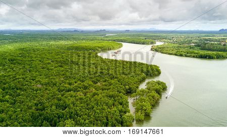 Aerial view of mangrove tree forest and river at Krabi, Thailand