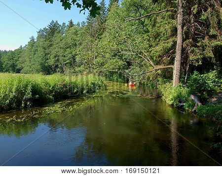 Kayaker on the forest stream river Rospuda.  District Augustow, Poland - August 08, 2012 Canoeist while canoeing on the river water Rozpudy in the forest near Augustow.