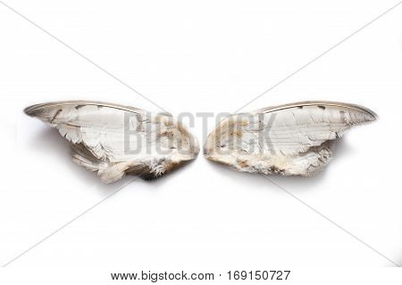 Two separated owl wings from the inner side