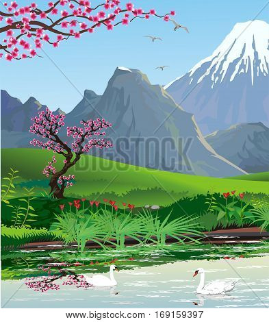 Landscape - view from the lake to the mountains. Swans on the lake. The cherry blossoms. Vector illustration