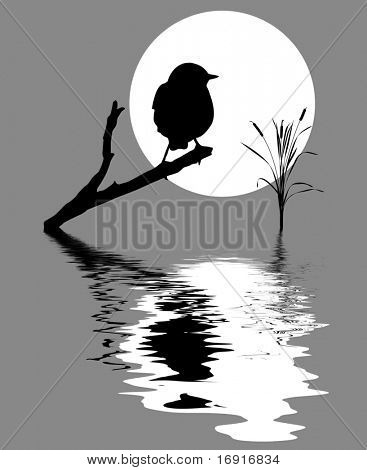 small bird on branch tree amongst water