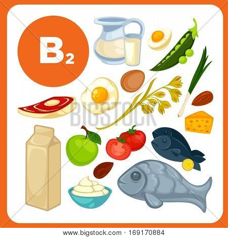 Set of organic food with vitamin B2. Ingredients for health: tomato, lemon, beef, milk, egg. Healthy nutrition, diet with B 2 sources: fruit and vegetables. Vector icons in cartoon design