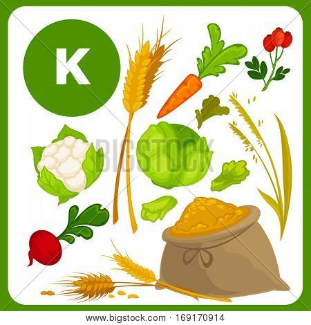 Set with illustrations of food with vitamin K. Ingredients for health: lettuce, spinach, cauliflower, cabbage. Healthy nutrition, diet with K sources. Vector icons in cartoon design, isolated on white