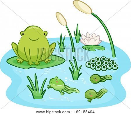 Cute Animal Illustration Featuring the Life Cycle of a Frog from the Infancy Up to the Adult Stage