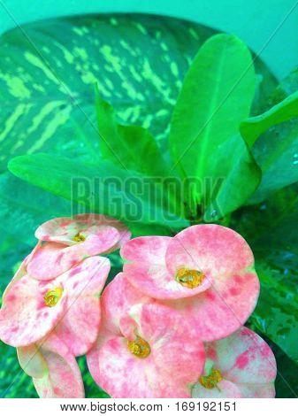 Flor con una expresion de alegria, colores vivos.