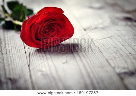 Red roses on wooden background concept for love, valentine's day, romance, thank you, celebration or anniversary
