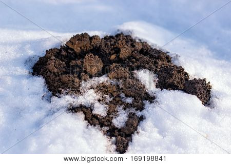 Clod of earth called molehill, caused by a mole, covered by snow in a field in winter.