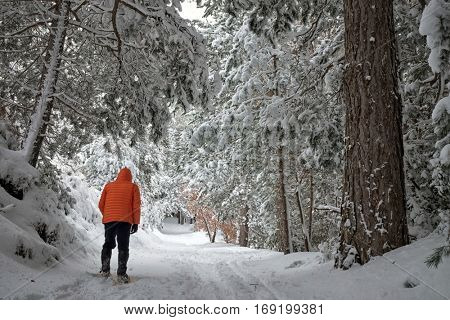 man jacket orange walking in snowy pine forest of Etna Park, Sicily