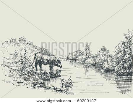 Cow drinking water at the river shore. Graphic landscape, artistic background