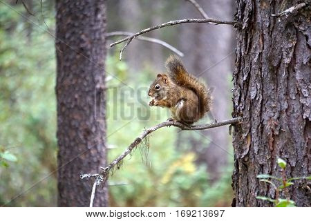 chipmunk eating while sitting on a small branch