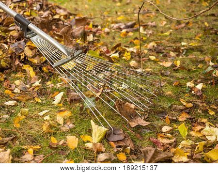 Leaves collected during garden autumn works Poland