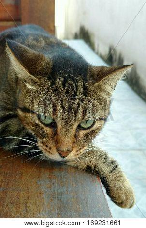 Foto de um gato fêmea, fazendo pose de modelo