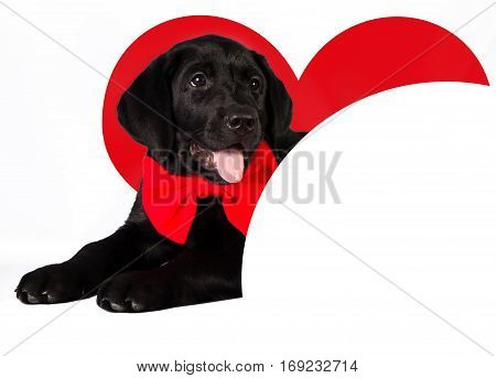 Puppy dog in love with a red heart and place for text.