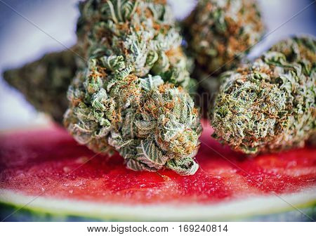 Macro detail of cannabis buds (watermelon marijuana strain) over a water melon slice
