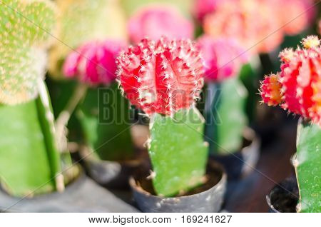 close up of cactus in flower pot