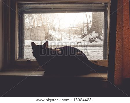 Winter season with the cat sit and waiting next to the window and copy space in shadow