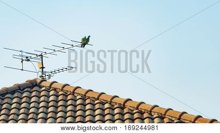 Couple of birds perched on the antenna over the roof in the morning sky.